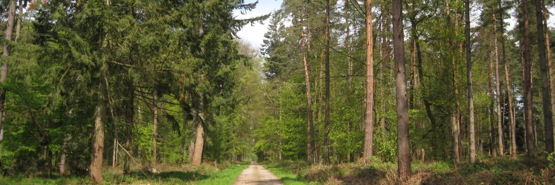 Forêt d'Arques